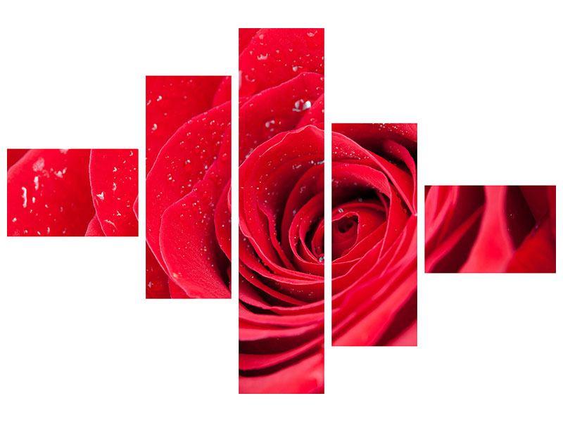 Leinwandbild 5-teilig modern Rote Rose im Morgentau