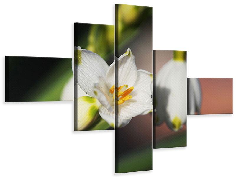Leinwandbild 5-teilig modern Schneeglöckchen XXL