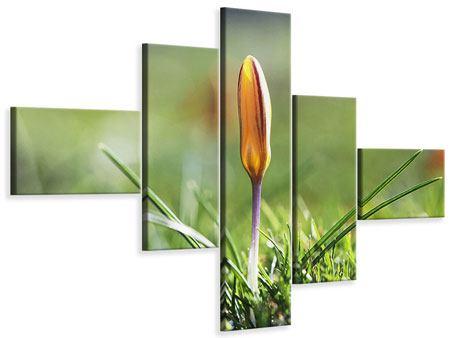 Leinwandbild 5-teilig modern Die Blütenknospe