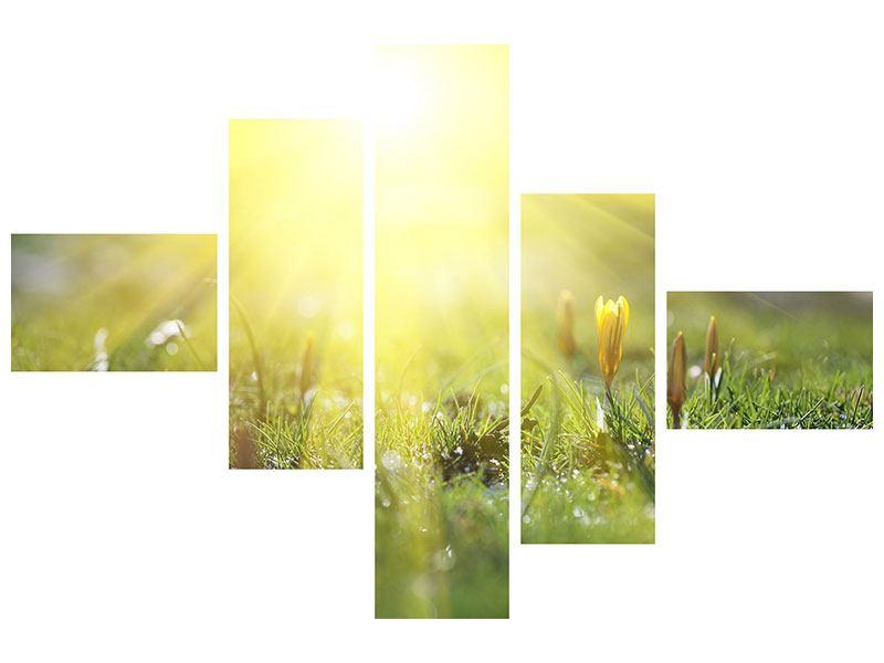 Leinwandbild 5-teilig modern Blumige Wiese