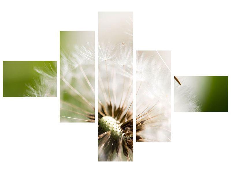Leinwandbild 5-teilig modern Pusteblume Löwenzahn