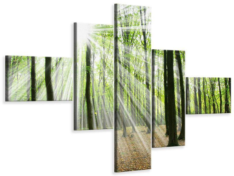 Leinwandbild 5-teilig modern Magisches Licht in den Bäumen