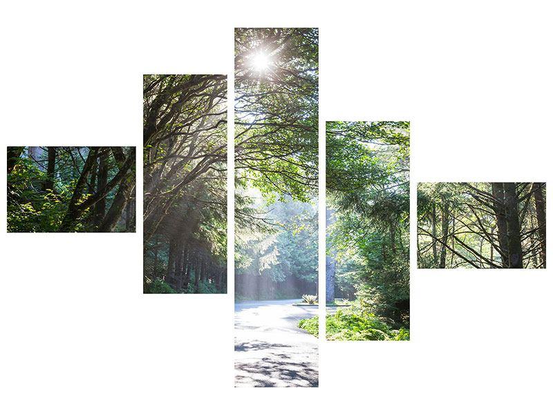 Leinwandbild 5-teilig modern Sonniger Waldweg