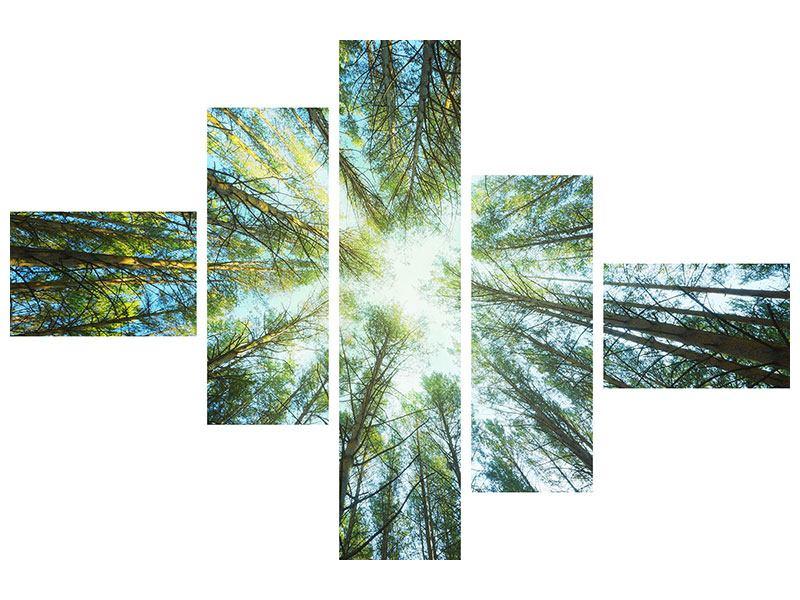 Leinwandbild 5-teilig modern Kiefernwald