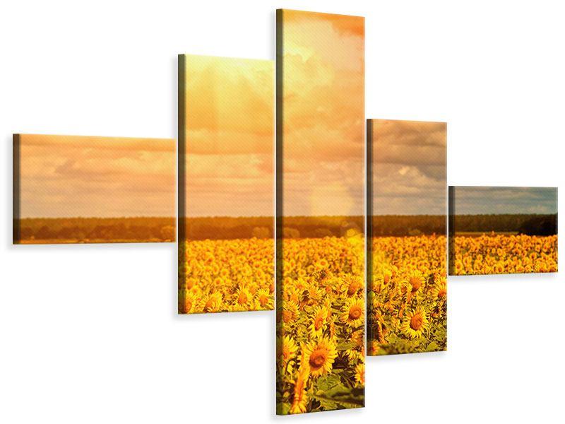 Leinwandbild 5-teilig modern Goldenes Licht für Sonnenblumen