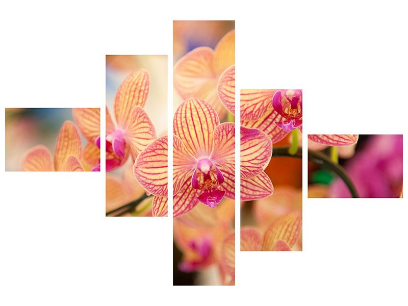 Leinwandbild 5-teilig modern Exotische Orchideen