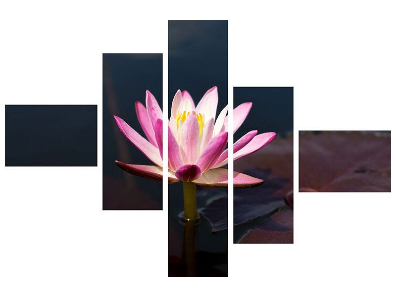 Leinwandbild 5-teilig modern Seerose in der Abenddämmerung