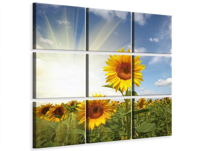 Leinwandbild 9-teilig Sonnenblumen im Sonnenlicht