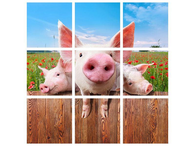 Leinwandbild 9-teilig Schweinchen im Glück