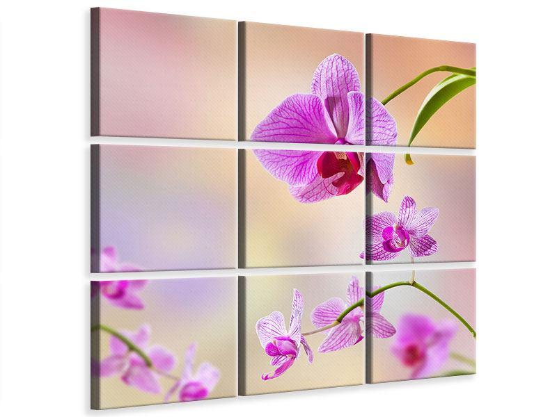 Leinwandbild 9-teilig Romantische Orchideen