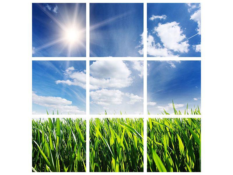 Leinwandbild 9-teilig Frühlingsgras