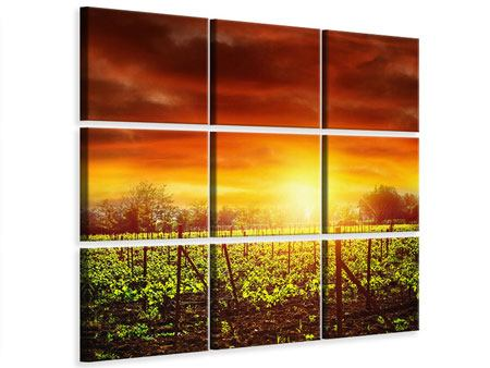 Leinwandbild 9-teilig Der Weinberg bei Sonnenuntergang