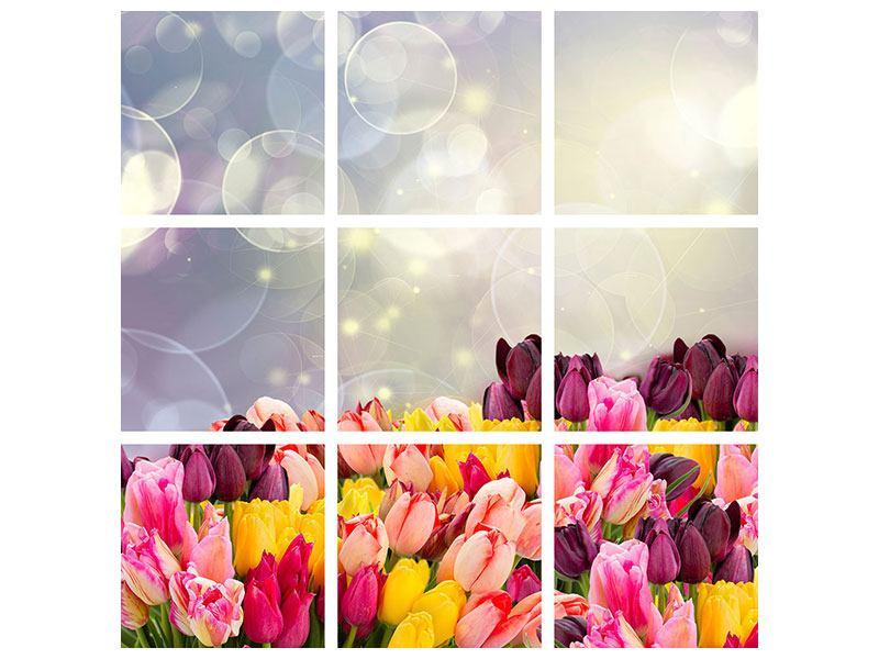 Leinwandbild 9-teilig Buntes Tulpenbeet im Lichtspiel