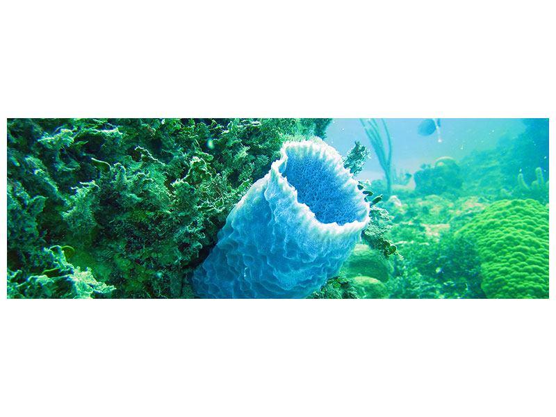 Metallic-Bild Panorama Korallen