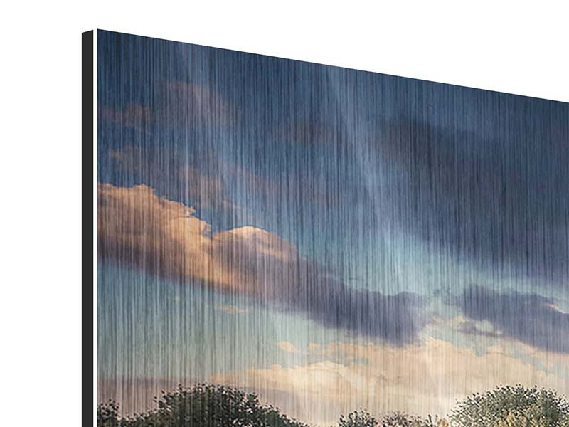 Metallic-Bild Panorama Die Wiesenmargerite am Fluss