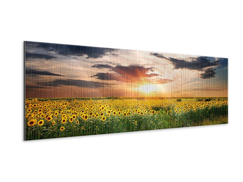 Metallic-Bild Panorama Ein Feld von Sonnenblumen