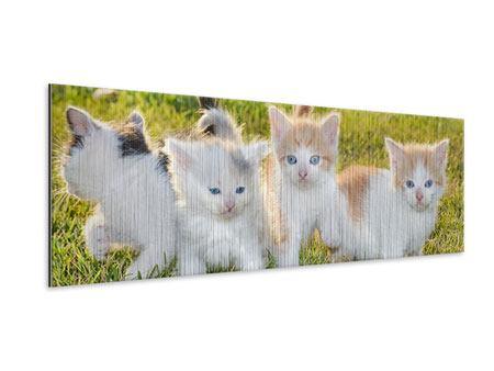 Metallic-Bild Panorama Katzenbabys