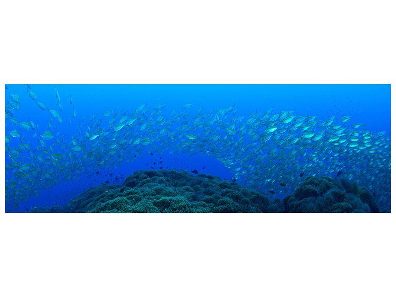 Metallic-Bild Panorama Fischschwärme