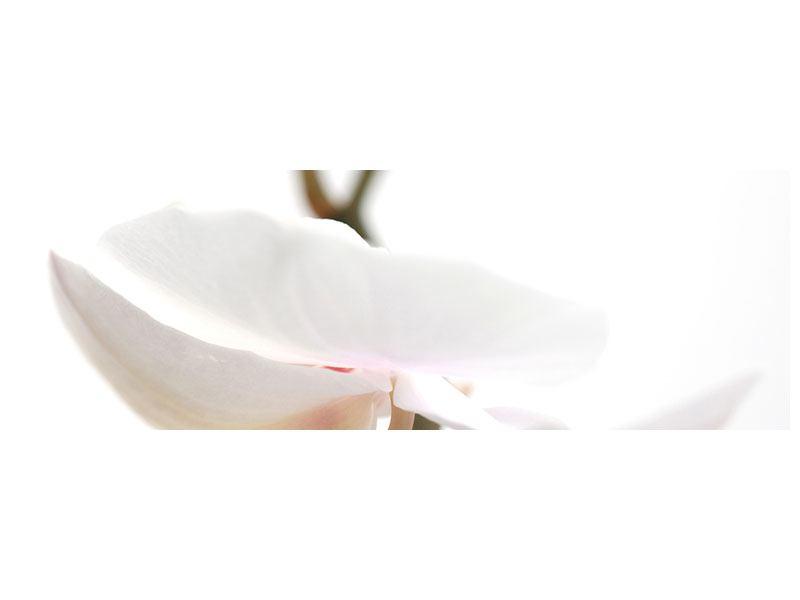Metallic-Bild Panorama XXL Orchideenblüte