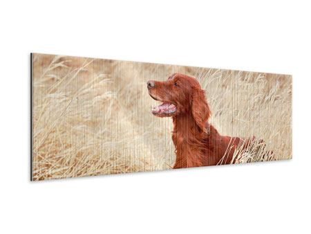 Metallic-Bild Panorama Irish Red Setter