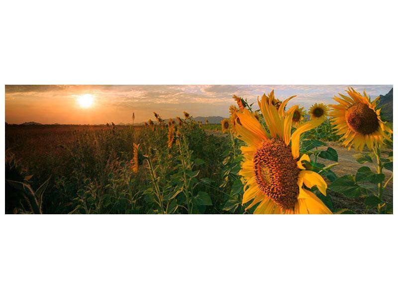 Metallic-Bild Panorama Sonnenblumen im Lichtspiel