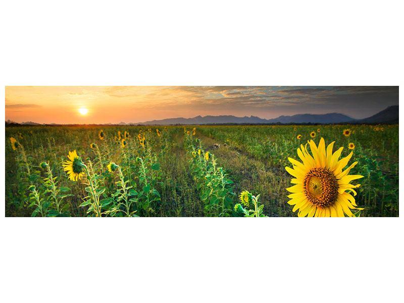 Metallic-Bild Panorama Sonnenblumenfeld im Abendrot