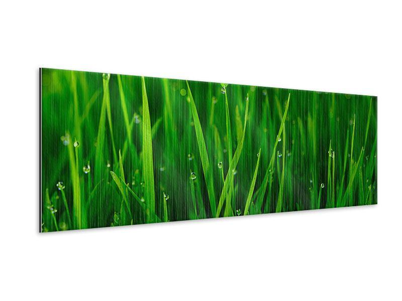 Metallic-Bild Panorama Gras mit Morgentau