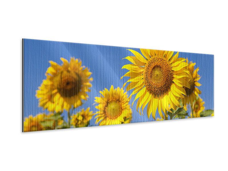 Metallic-Bild Panorama Himmlische Sonnenblumen