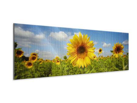 Metallic-Bild Panorama Sommer-Sonnenblumen