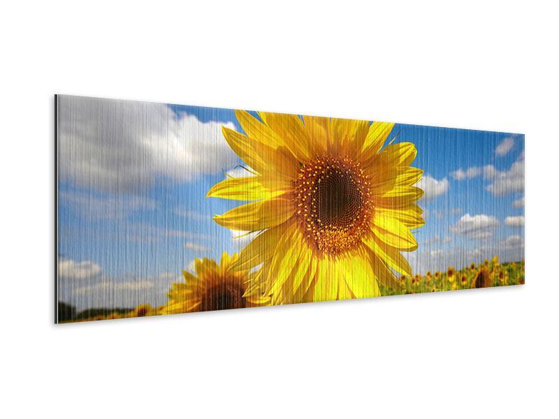 Metallic-Bild Panorama Das Feld der Sonnenblumen