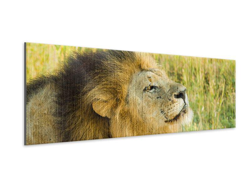Metallic-Bild Panorama Der König der Tiere