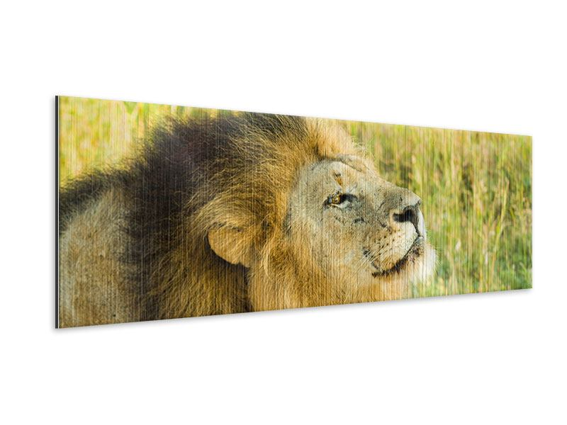 Panoramic Metallic Print The King Of Beasts