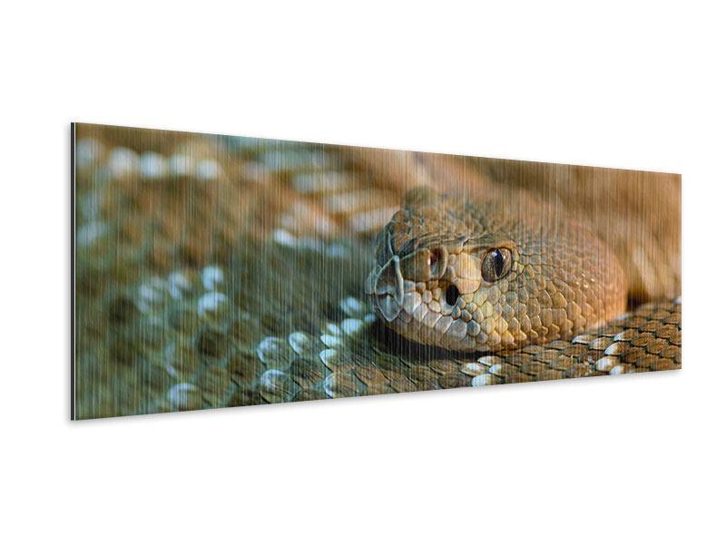 Metallic-Bild Panorama Viper