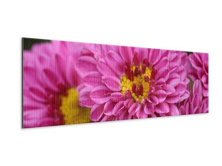 Metallic-Bild Panorama Chrysanthemen