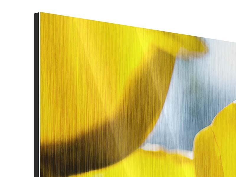 Metallic-Bild Panorama Gelbe Tulpen in XXL