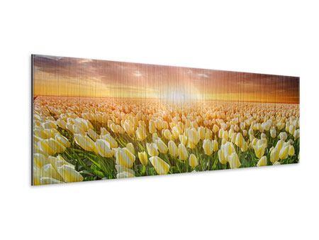 Metallic-Bild Panorama Sonnenaufgang bei den Tulpen