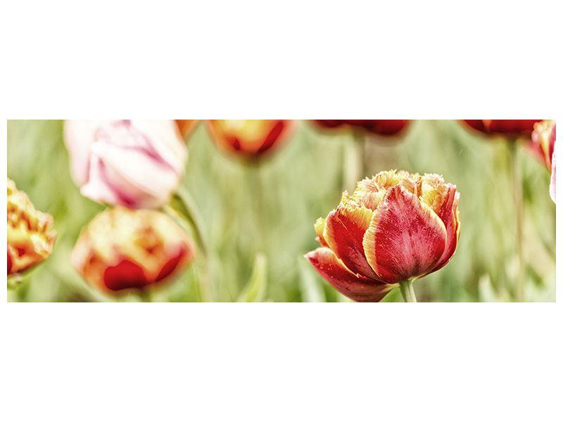 Metallic-Bild Panorama Die Schönheit der Tulpe