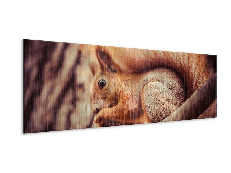 Metallic-Bild Panorama Eichhörnchen