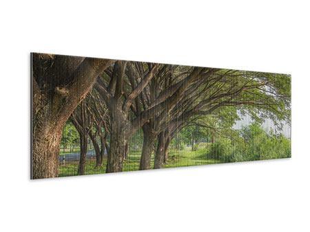 Metallic-Bild Panorama Alter Baumbestand