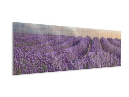 Metallic-Bild Panorama Das blühende Lavendelfeld
