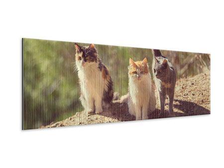 Metallic-Bild Panorama Katzen im Garten