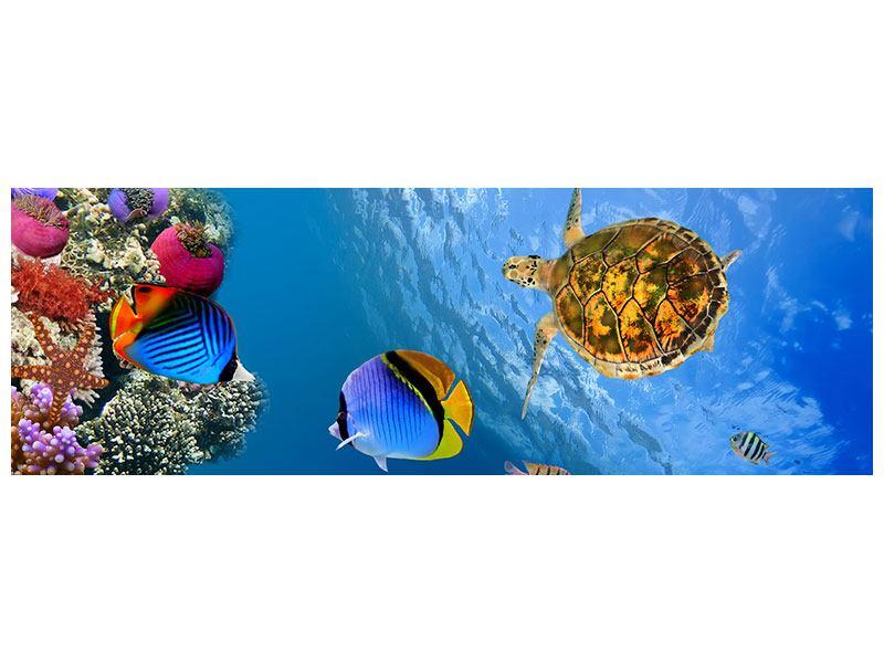 Metallic-Bild Panorama Fisch im Wasser