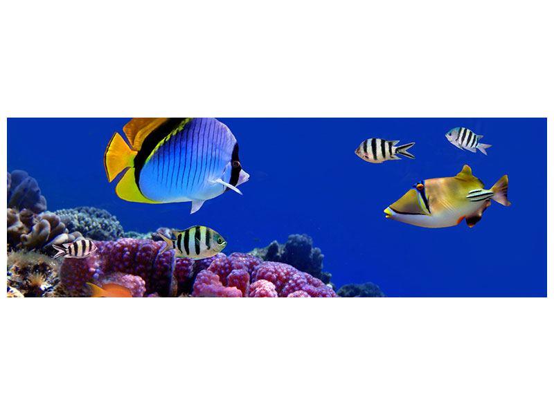 Metallic-Bild Panorama Welt der Fische