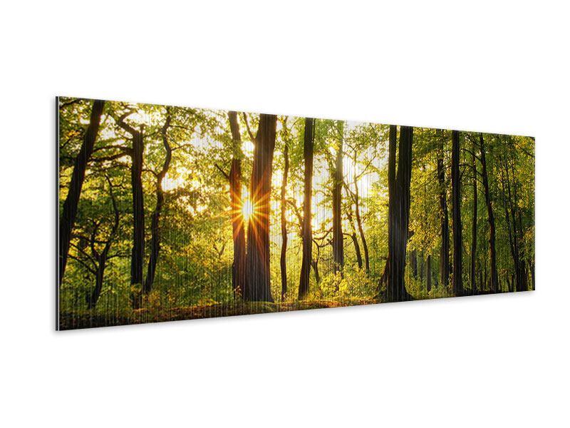 Metallic-Bild Panorama Sonnenuntergang zwischen den Bäumen