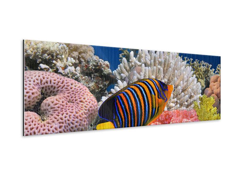 Metallic-Bild Panorama Mit den Fischen tauchen