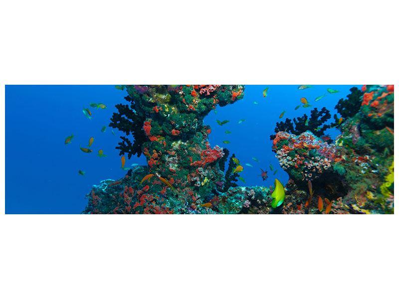 Metallic-Bild Panorama Die Welt der Fische