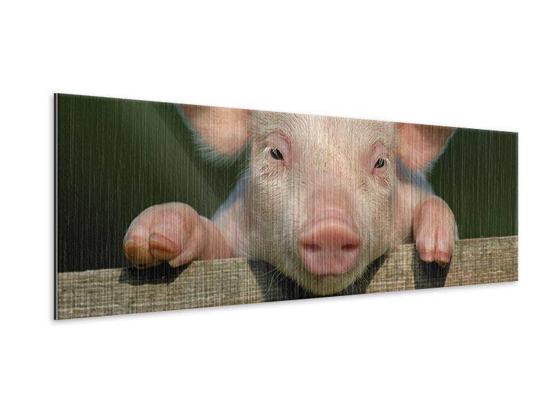 Metallic-Bild Panorama Schweinchen Namens Babe