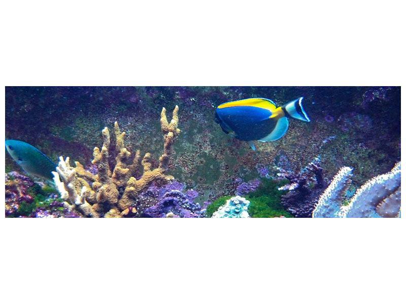 Metallic-Bild Panorama Fische