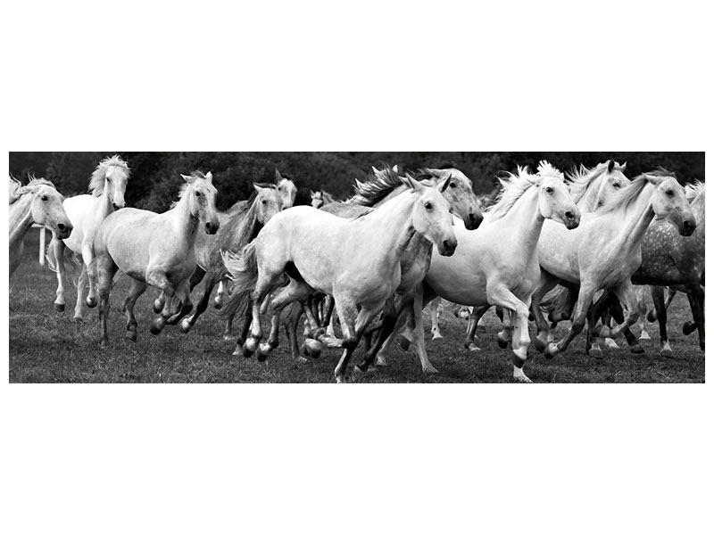 Metallic-Bild Panorama Die Mustang Herde