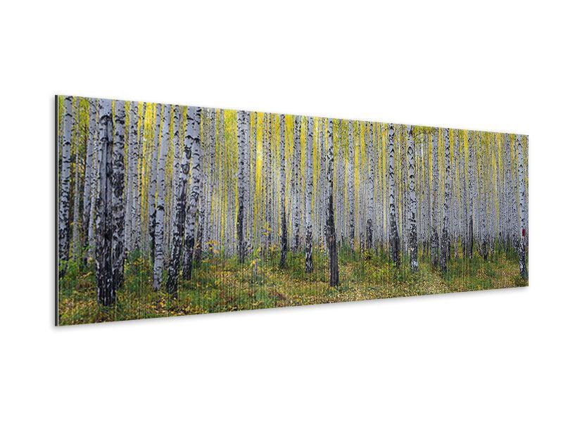 Metallic-Bild Panorama Herbstlicher Birkenwald